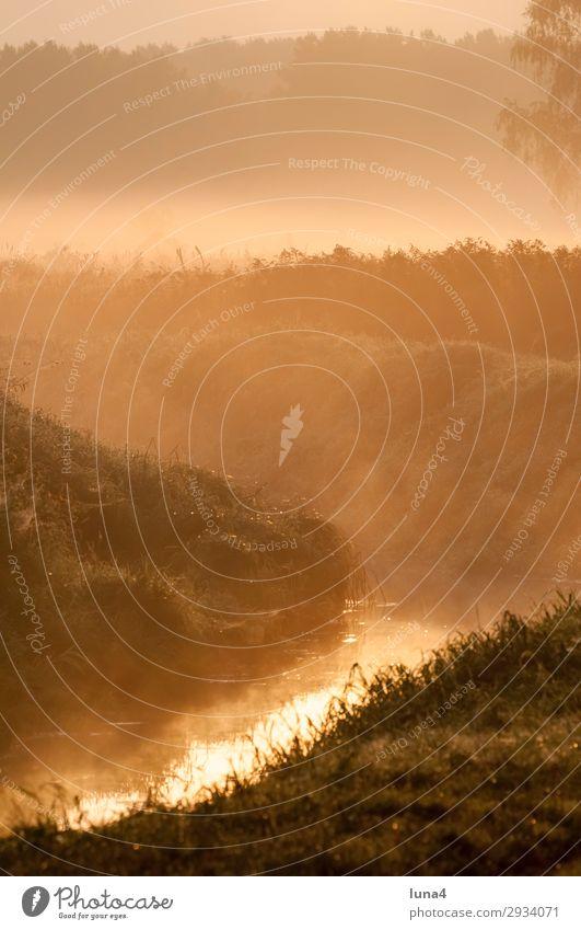 Morgennebel über einem Bach ruhig Sonne Umwelt Natur Landschaft Wasser Herbst Wetter Nebel Baum Wiese Feld Wald grün rot Stimmung Romantik Idylle Graben Dunst