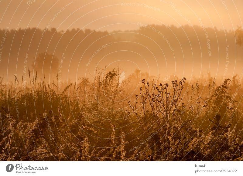 Frühnebel bei Sonnenaufgang ruhig Umwelt Natur Landschaft Herbst Wetter Nebel Baum Wiese Feld Wald gelb grün rot Stimmung Romantik Idylle Morgennebel Dunst