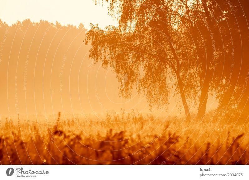 Frühnebel bei Sonnenaufgang ruhig Umwelt Natur Landschaft Herbst Wetter Nebel Baum Wiese Feld Wald gelb rot Stimmung Romantik Idylle Morgennebel Dunst Nebelbank