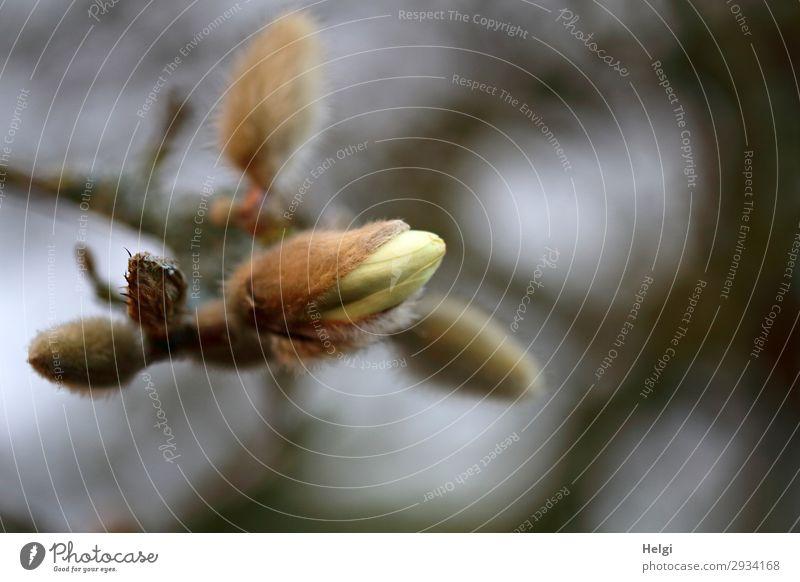Aufbruch Natur Pflanze weiß Leben Umwelt Blüte Frühling natürlich braun grau Stimmung Park Wachstum ästhetisch Sträucher Blühend