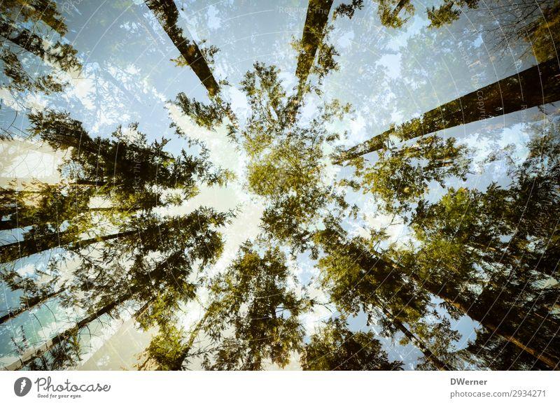Waldkrone Umwelt Natur Pflanze Urelemente Himmel Wolken Sonne Sommer Klima Klimawandel Wetter Schönes Wetter Baum beobachten Wachstum außergewöhnlich