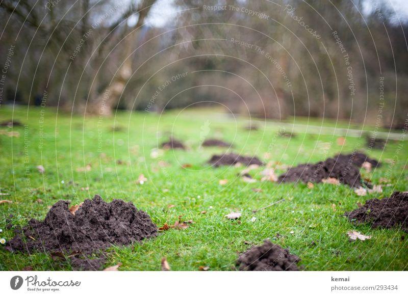 Jetzt buddeln sie wieder Natur grün Pflanze Landschaft Blatt Winter Umwelt Gras Frühling Garten braun Park dreckig Erde leer Hügel
