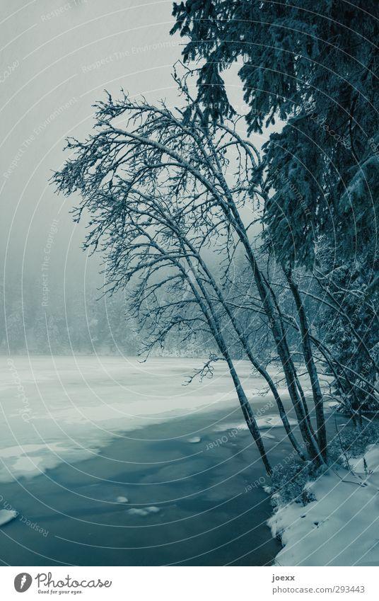 Kein Pardon Natur Landschaft Wolken Winter Wetter schlechtes Wetter Nebel Eis Frost Schnee Wald Seeufer Mummelsee Schwarzwald kalt blau schwarz weiß Farbfoto