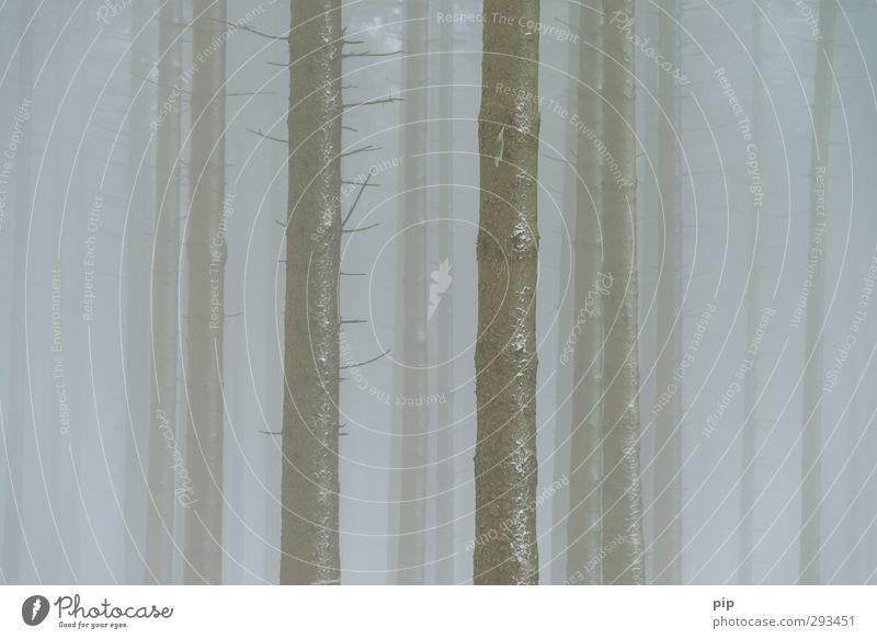 barcode Natur Baum Winter Wald Umwelt kalt Nebel Ast Baumstamm Tanne bizarr bleich vertikal Umweltverschmutzung schlechtes Wetter trüb