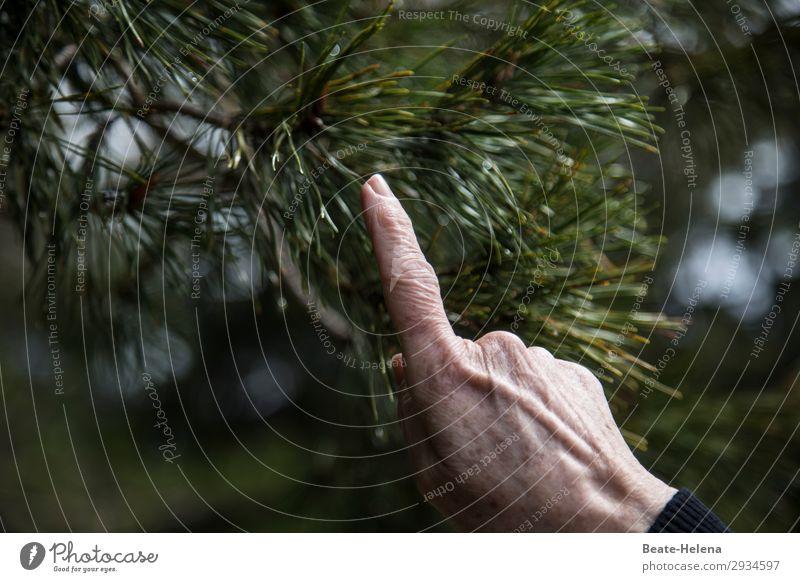 Hände - mit Finger zeigen Hand Natur Baum Wald Zeichen Arbeit & Erwerbstätigkeit wählen gebrauchen berühren Bewegung entdecken streichen authentisch