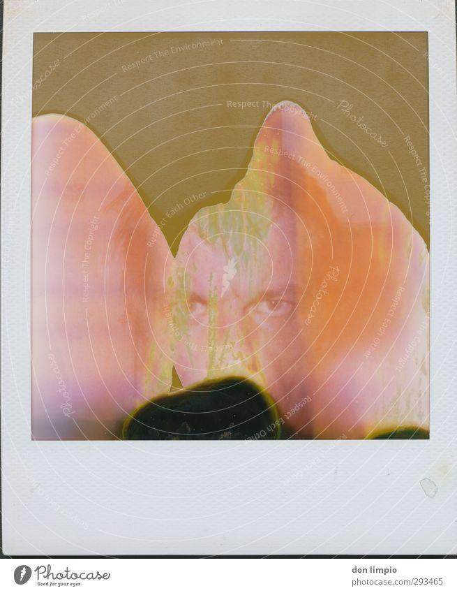 bathing in microwaves maskulin Mann Erwachsene Kopf 1 Mensch Blick eckig trashig violett orange Stil Surrealismus verwaschen abgelaufen Unschärfe unvollendet