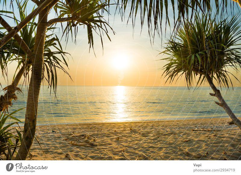Sonnenuntergang am tropischen Strand mit Palmen exotisch schön Ferien & Urlaub & Reisen Sommer Sommerurlaub Sonnenbad Meer Insel Natur Landschaft Sand Wasser