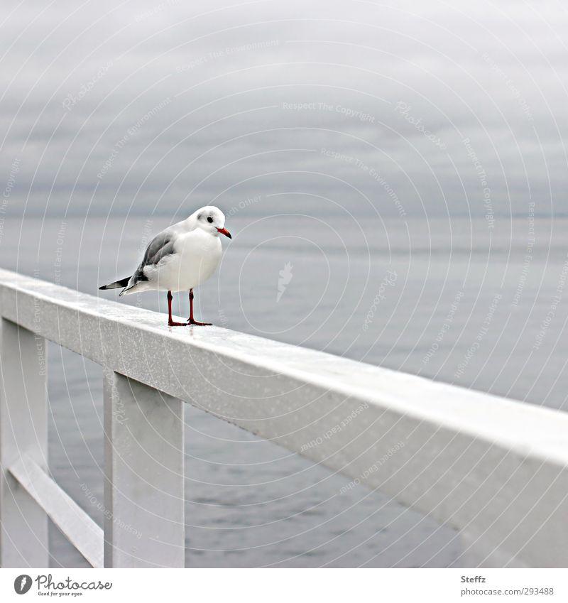 nun steh' ich hier und warte Natur Wasser Meer Einsamkeit Landschaft Küste Vogel Horizont Regen stehen warten einzeln nass Geländer Ostsee Appetit & Hunger