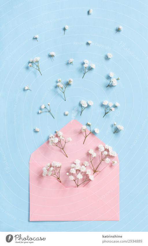 Blumen und Umschlag auf hellblauem Hintergrund Design Dekoration & Verzierung Valentinstag Muttertag Hochzeit Frau Erwachsene oben Kreativität romantisch