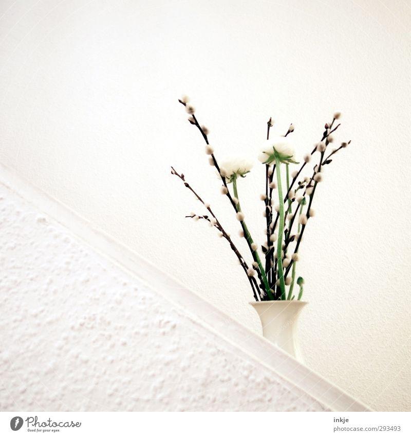 Frühling. Tendenz steigend. schön weiß Wand Frühling Mauer Blüte hell Treppe Häusliches Leben Dekoration & Verzierung einfach Blühend Neigung Blumenstrauß Tapete diagonal