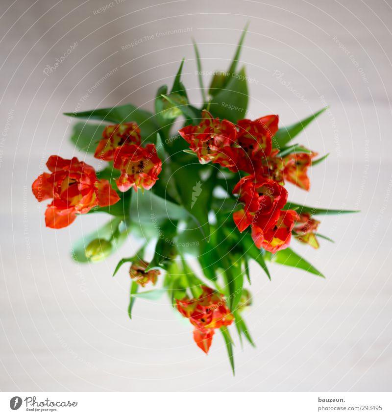 auf dem tisch. Pflanze grün rot Blume Blatt Innenarchitektur Blüte Holz orange Design Häusliches Leben Dekoration & Verzierung frisch authentisch ästhetisch
