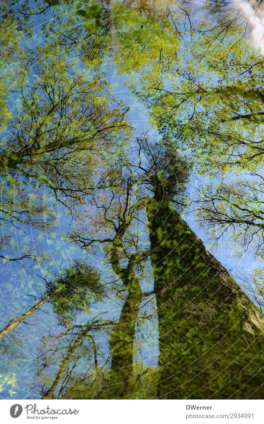 Doppel Umwelt Natur Pflanze Urelemente Himmel Sonne Sonnenlicht Frühling Klima Klimawandel Wetter Schönes Wetter Baum Wald Urwald Blühend leuchten Wachstum