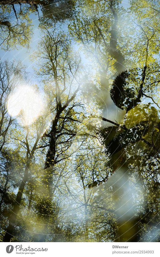 Doppel Umwelt Natur Pflanze Urelemente Himmel Sonne Sonnenlicht Frühling Klima Klimawandel Wetter Schönes Wetter Baum Wald Blühend ästhetisch gigantisch hell