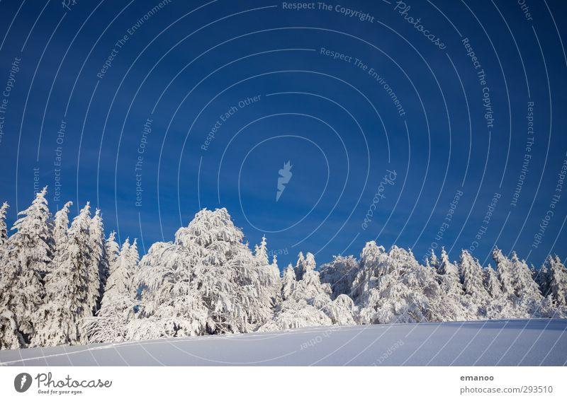 Schneewald Ferien & Urlaub & Reisen Winterurlaub Berge u. Gebirge Umwelt Natur Landschaft Pflanze Himmel Wolkenloser Himmel Klima Klimawandel Wetter Eis Frost