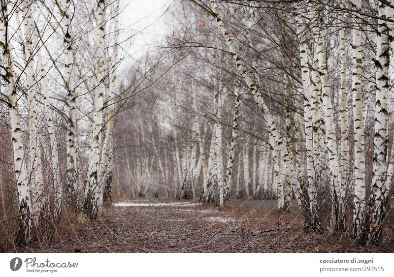 the rails are gone now schön weiß Pflanze Baum Einsamkeit Landschaft Winter ruhig Wald Traurigkeit Wege & Pfade hell träumen Idylle Hoffnung Vergänglichkeit