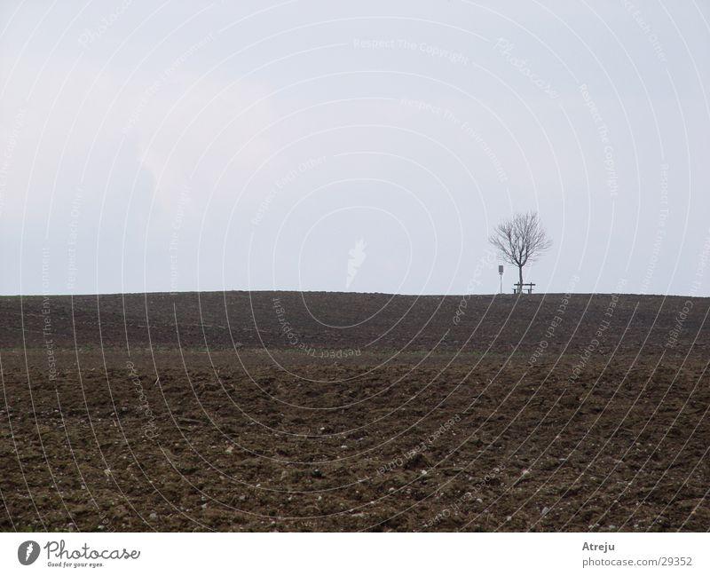 Einsam Baum Einsamkeit Herbst grau Feld Nebel Bank