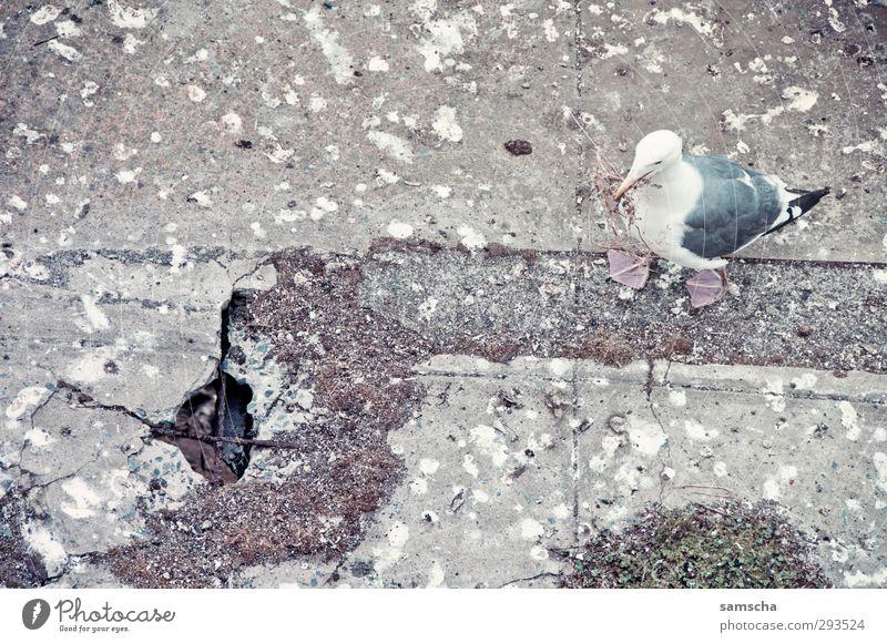 verschissen Natur Tier Umwelt Vogel fliegen dreckig wild Wildtier Beton kaputt Kot Möwe tierisch trashig Ekel Nest