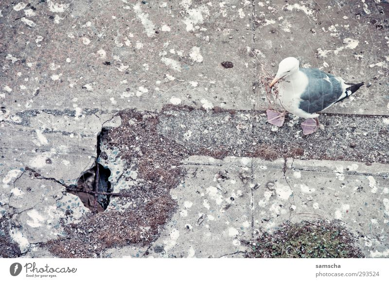 verschissen Umwelt Natur Tier Wildtier Vogel 1 dreckig Ekel kaputt trashig wild Möwe Möwenvögel Möwendreck Vogeldreck Kot Beton Betonplatte betoniert Betonboden