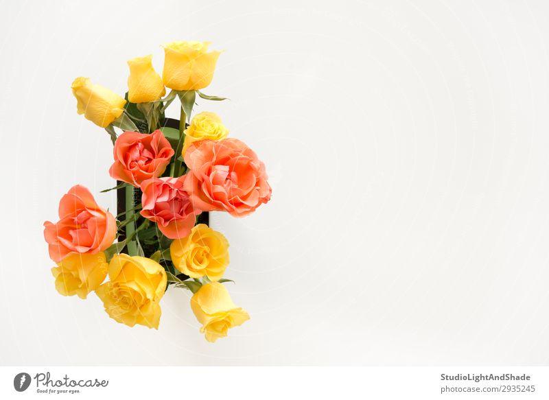 Rosenstrauß auf weißem Hintergrund elegant Design schön Duft Dekoration & Verzierung Valentinstag Muttertag Hochzeit Geburtstag Gartenarbeit feminin Erwachsene