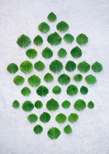 Grüne Blätter auf grauem Betongrund schön Sommer Natur Pflanze Baum Blatt Wald natürlich grün Farbe Kreativität Ordnung Symmetrie Jahreszeiten saisonbedingt