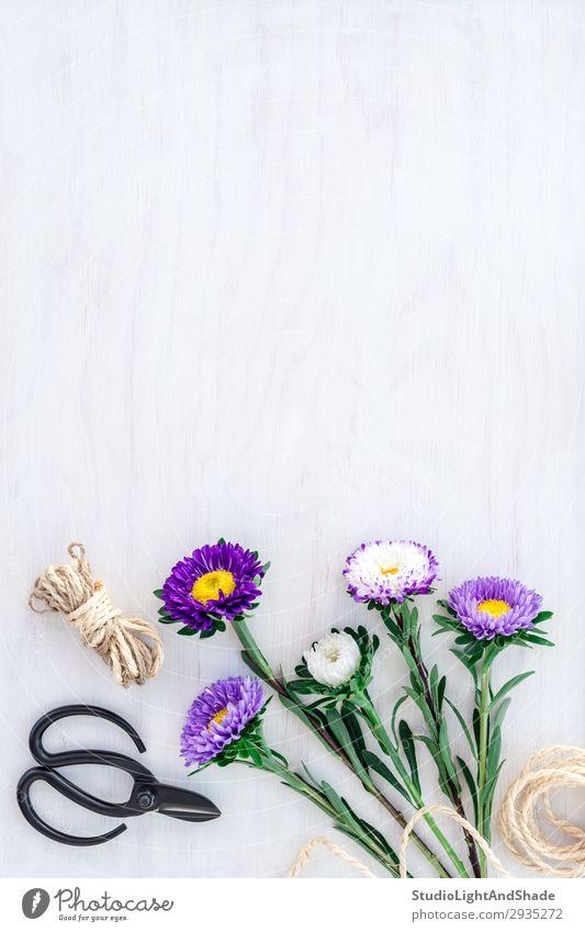Blumenstrauß der Astern auf weißem Holzgrund kaufen Design schön Sommer Garten Dekoration & Verzierung Geburtstag Gartenarbeit Schere Seil Natur Pflanze Blüte