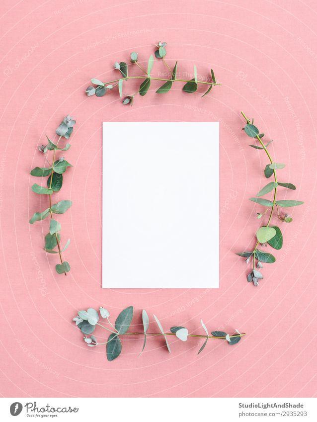 Natur Pflanze Farbe schön grün weiß Blatt natürlich Stil Textfreiraum Mode rosa Design Dekoration & Verzierung frisch modern