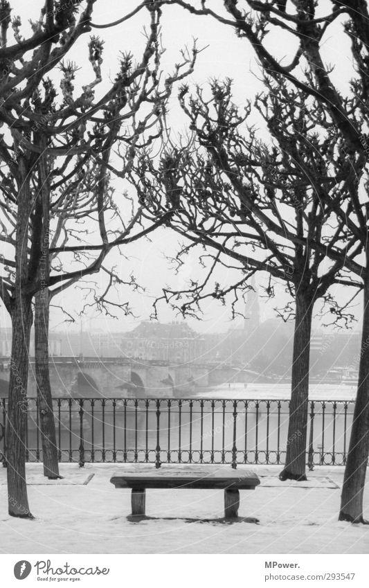 urban place Stadt Hauptstadt Hafenstadt Stadtzentrum Menschenleer Park Platz grau schwarz Winter Bankgebäude kahl trist Dresden Elbe Zaun 4 Baum Brücke