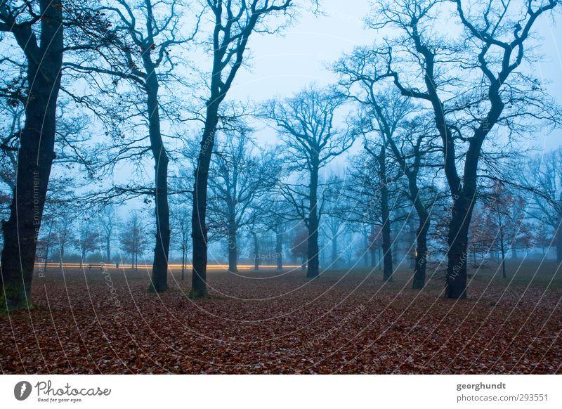 Am schwarzen Licht Natur blau Pflanze Baum Landschaft ruhig Wald Umwelt Tod Herbst Gefühle Traurigkeit grau Garten braun