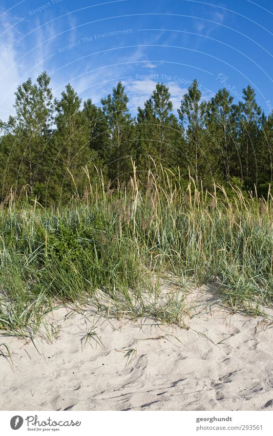 sogenannter Naturstrand Freizeit & Hobby Spielen Sommer Sommerurlaub Sonne Sonnenbad Strand Meer Insel Pflanze Baum Gras Sträucher Wiese Feld Wald Küste Ostsee
