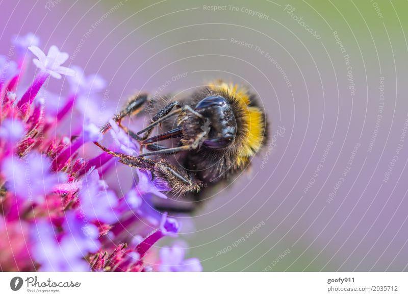 Arbeitstier Ausflug Umwelt Natur Pflanze Tier Sonnenlicht Frühling Sommer Herbst Blume Blüte Garten Park Wiese Nutztier Wildtier Biene Tiergesicht Flügel Fell
