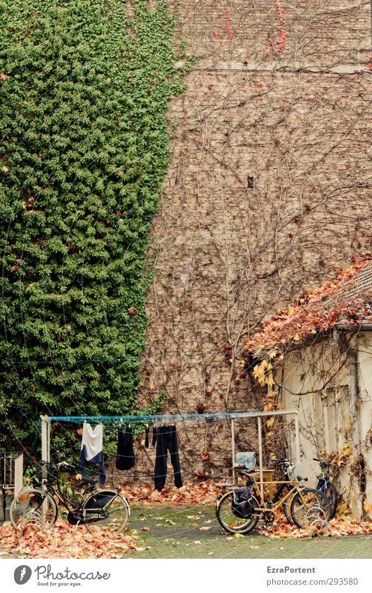 hinten im Hof grün Stadt Pflanze Blatt Haus Umwelt Wand Herbst Mauer Gebäude braun liegen orange Fassade Fahrrad stehen