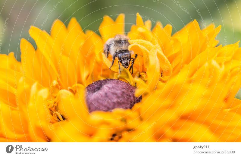 Versteckspiel Ausflug Umwelt Natur Frühling Sommer Herbst Blume Blüte Garten Park Wiese Tier Nutztier Wildtier Biene Tiergesicht Flügel Fell 1