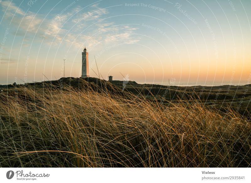 Blavands HukBlavands Natur Landschaft Küste Strand Nordsee Meer atmen Erholung Dänemark Blavands Fyr Dünengras Stranddüne Turm Leuchtturm Abend Dämmerung