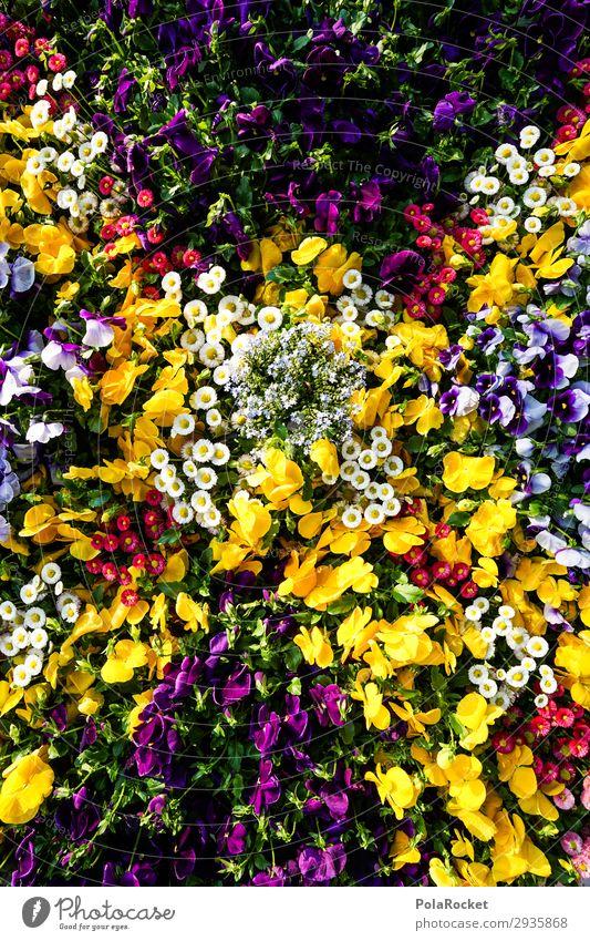 #S# Flower Power Umwelt Natur Pflanze Blume ästhetisch schön Blumenwiese Beet mehrfarbig natürlich genießen Stiefmütterchen Stiefmütterchenblüte Frühling Sommer