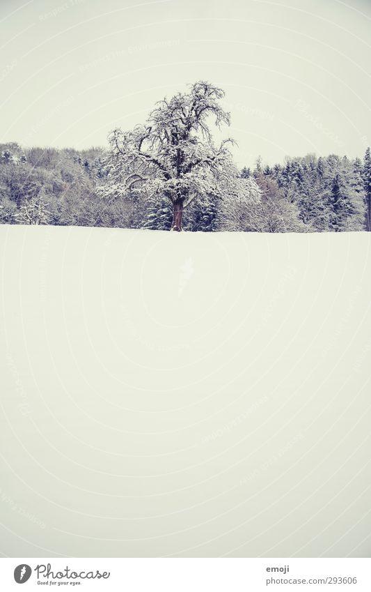 sucré Umwelt Natur Landschaft Winter Schnee Baum Feld kalt weiß Farbfoto Gedeckte Farben Außenaufnahme Menschenleer Textfreiraum oben Textfreiraum unten