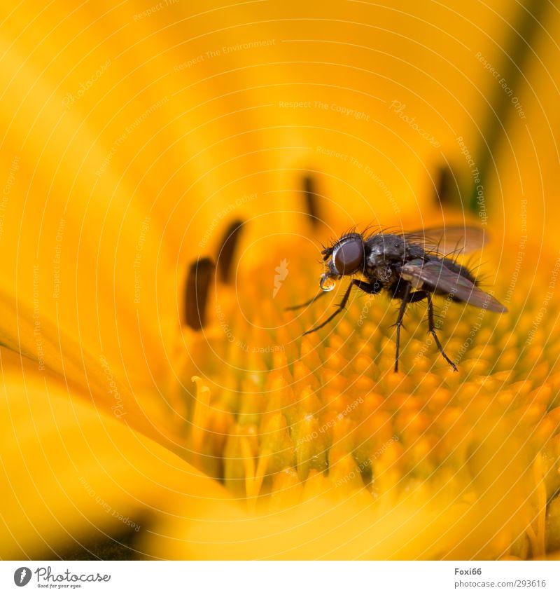Wasser ist Leben Natur Sommer Pflanze Blume Tier ruhig Umwelt gelb Wiese klein braun natürlich außergewöhnlich Regen Fliege nass