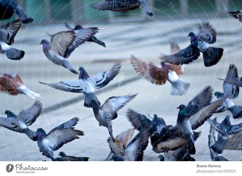 Hitchcock lässt grüßen Umwelt Winter Schönes Wetter Stadt Stadtzentrum Tier Vogel Taube Tiergruppe fliegen Fressen füttern warten Unendlichkeit verrückt