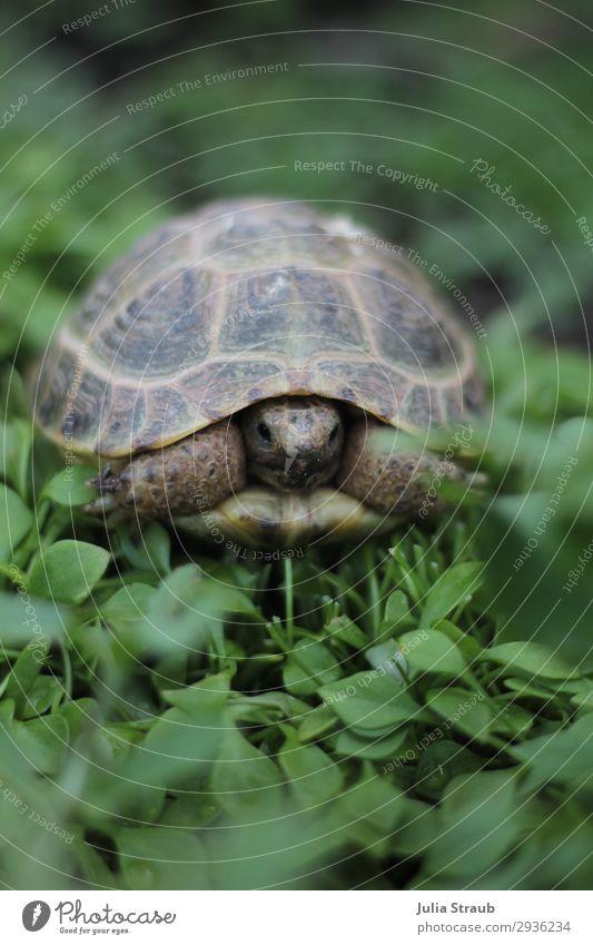 Schildkröte Salat Grün Ein Lizenzfreies Stock Foto Von Photocase
