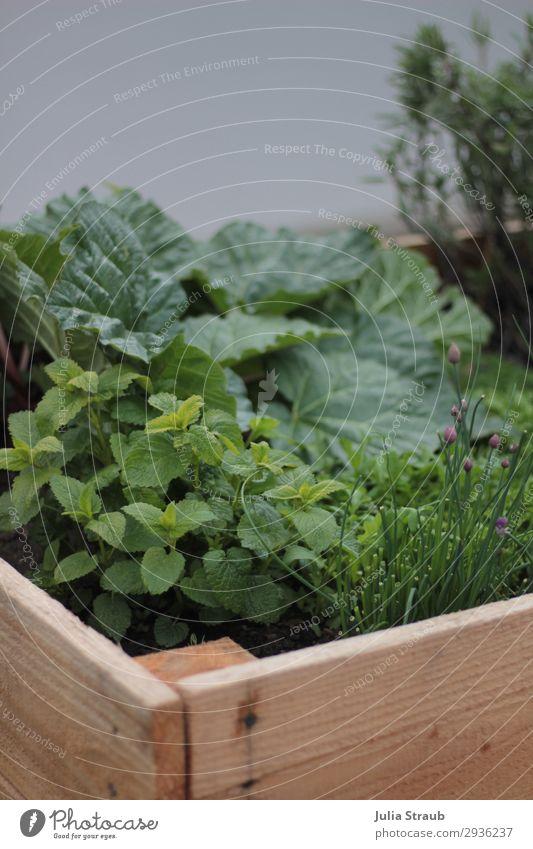 Hochbeet frisch grün Rhabarber Natur Sommer Pflanze Nutzpflanze Garten Gesundheit lecker braun nachhaltig Zitronenmelisse Schnittlauch Salbei Blüte Holzbrett