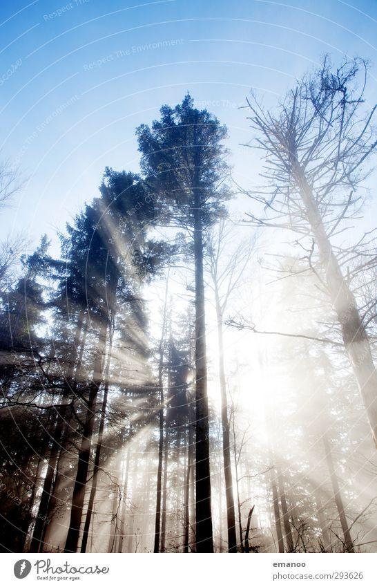 crossing the forest Ferien & Urlaub & Reisen Ausflug Berge u. Gebirge wandern Umwelt Natur Landschaft Pflanze Luft Himmel Sonne Herbst Klima Wetter Nebel Baum