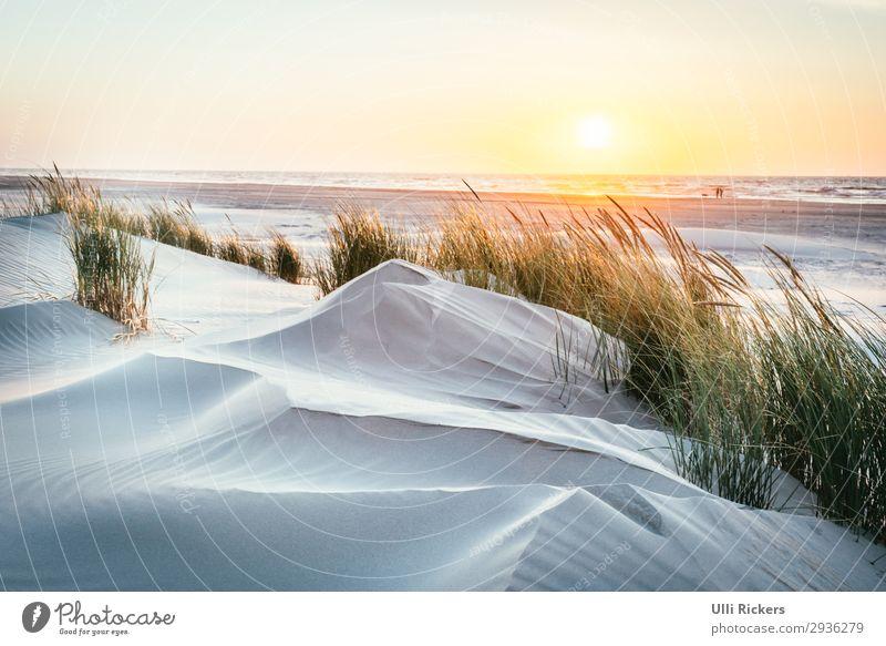 Vom Strand zum Meer Ferien & Urlaub & Reisen Natur Sommer Pflanze blau grün Sonne Erholung Ferne gelb Umwelt Küste Gras Tourismus