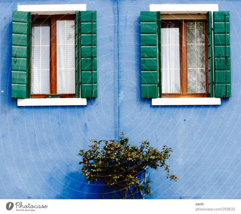 für Jungs Pflanze Sträucher Venedig Burano Italien Dorf Fischerdorf Altstadt Haus Mauer Wand Fassade Fenster Fensterladen Häusliches Leben blau Farbfoto