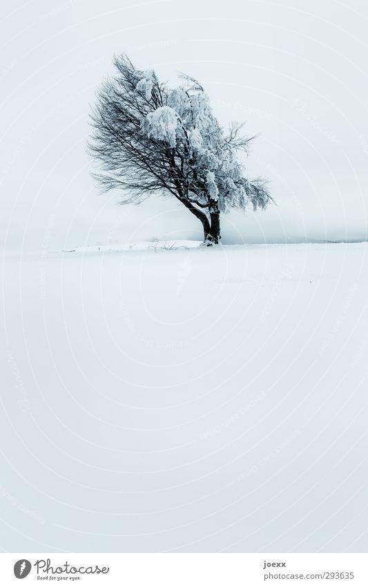 Wind Natur Horizont Winter schlechtes Wetter Eis Frost Schnee Baum Windflüchter Berge u. Gebirge Schauinsland alt groß kalt blau schwarz weiß Kraft geduldig