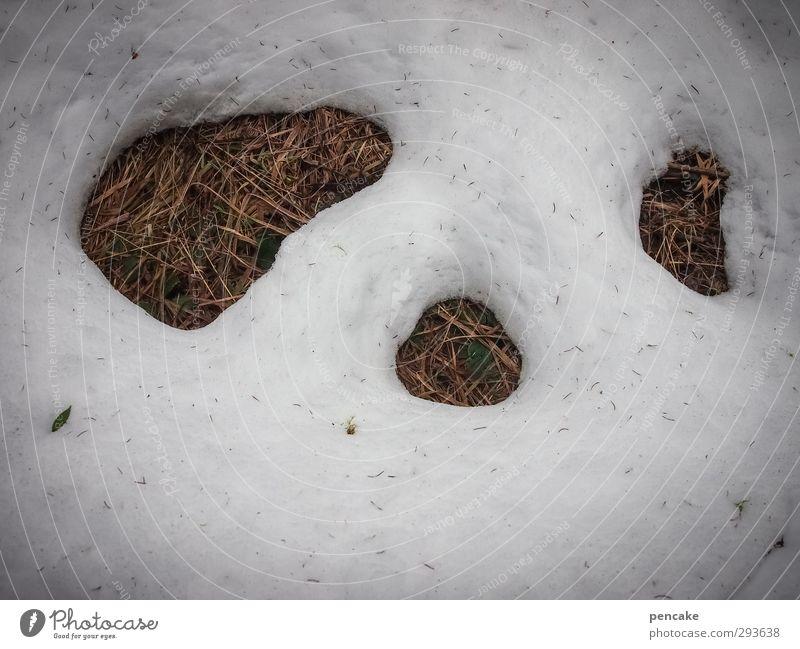 winteraustreiben Gesicht Natur Pflanze Urelemente Erde Frühling Winter Schnee Gras Zeichen einzigartig kalt listig lustig rund unten braun weiß kultig Frost