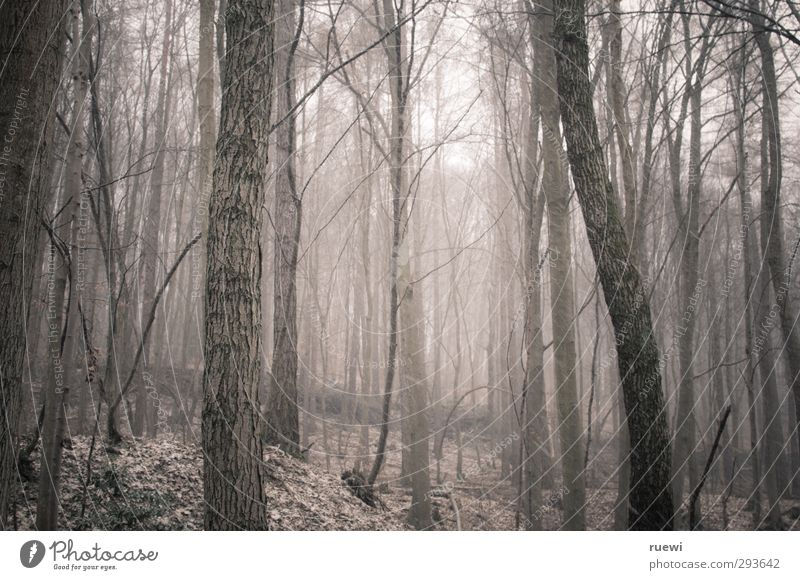 Und noch immer... Natur weiß Pflanze Baum Einsamkeit Tier Landschaft Winter Wald Umwelt dunkel kalt Schnee Gefühle Holz grau