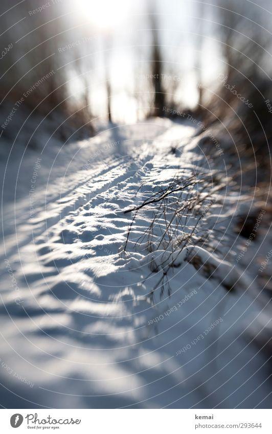Das Licht wird schwächer Umwelt Natur Landschaft Pflanze Winter Schönes Wetter Eis Frost Schnee Baum Sträucher Ast Zweig Wald Hügel hell kalt weiß Spuren