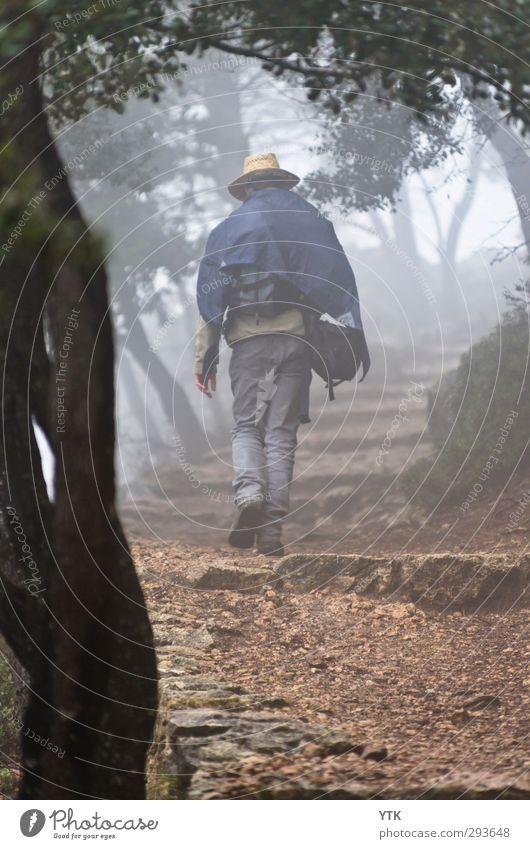 Coming out of the Fog Mensch maskulin Junger Mann Jugendliche Erwachsene Rücken Beine Fuß 1 18-30 Jahre Umwelt Natur Pflanze Urelemente Erde Luft Klima