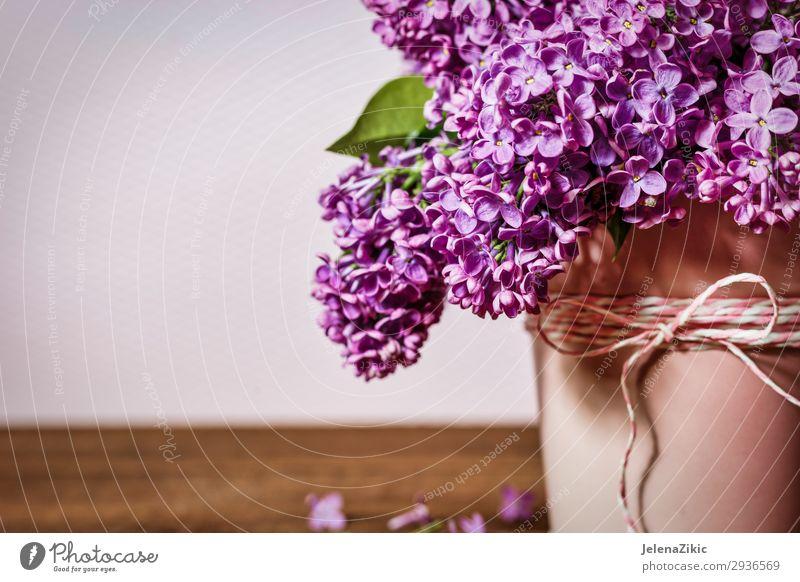 Schöner Strauß aus Fliederfarben elegant schön Sommer Garten Dekoration & Verzierung Feste & Feiern Valentinstag Muttertag Hochzeit Geburtstag Gartenarbeit