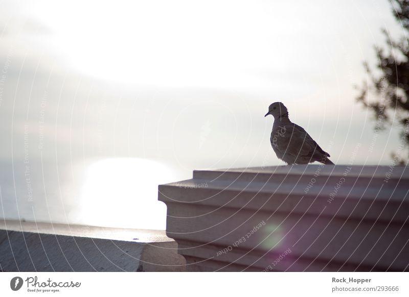 Taube mit Meerblick Himmel blau Stadt Tier Wolken ruhig Ferne Wand Herbst Mauer grau Küste braun Wildtier sitzen