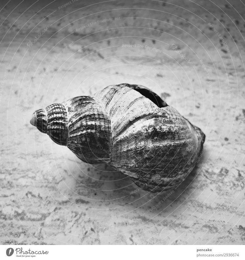 luft nach oben Schnecke alt ästhetisch authentisch kaputt Loch Luft Meerestier Tod leer Steinplatten Marmor kalt Schwarzweißfoto Innenaufnahme Nahaufnahme